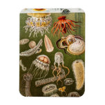 Vintage Jellyfish Antique Jelly Fish Illustration Rectangular Photo Magnet