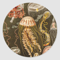 Vintage Jellyfish Antique Jelly Fish Template Classic Round Sticker