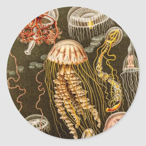 Vintage Jellyfish Antique Jelly Fish Template Round Stickers