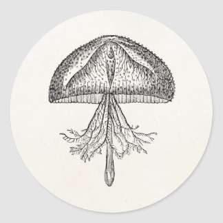 Vintage Jellyfish Antique Jellyfishes Template Round Sticker