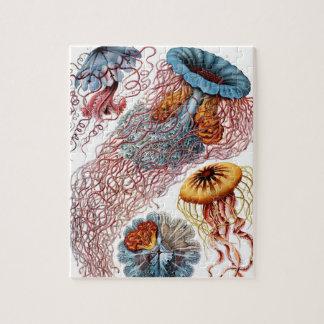 Vintage Jellyfish by Ernst Haeckel, Discomedusae Jigsaw Puzzle
