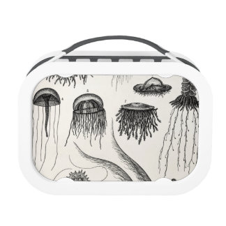 Vintage Jellyfish Species Retro Jelly Fish Yubo Lunch Box