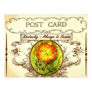 Vintage Kentucky State Flower Postcard