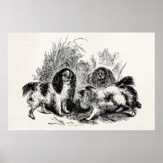 Vintage King Charles Spaniel Dog 1800s Spaniels Poster