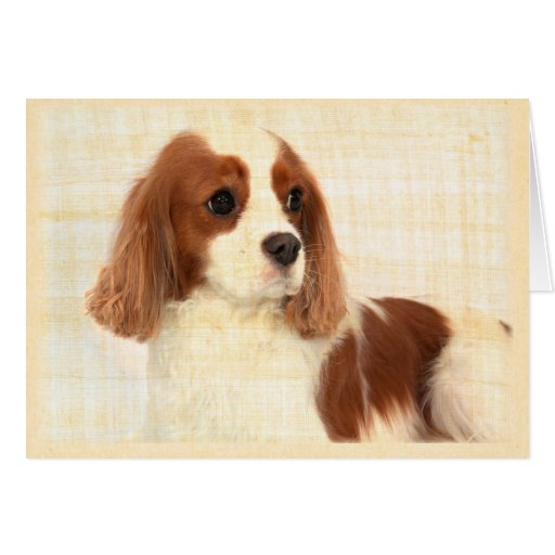 Vintage King Charles Spaniel Think Of You Card