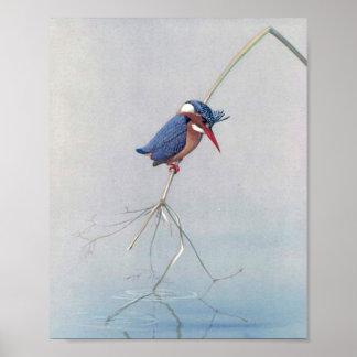 Vintage King Fisher Bird Poster