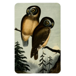 Vintage Kirtlands Owl Rectangular Photo Magnet