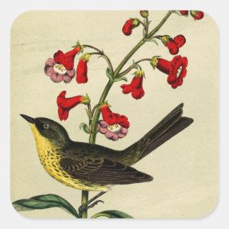 Vintage Kirtlands Warbler Bird Square Sticker