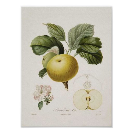 Vintage Wall Art For The Kitchen : Vintage apple poster zazzle
