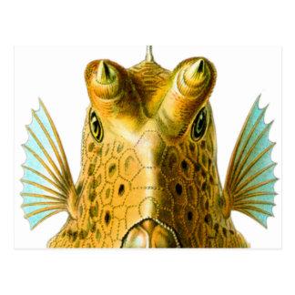 Vintage Kitsch Cowfish Fish Illustration Art Postcard