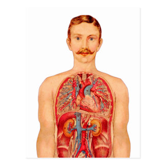vintage Kitsch Medical Art Internal Organs Man Postcard