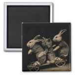 Vintage Kitten and Bunny Funny photo Fridge Magnets