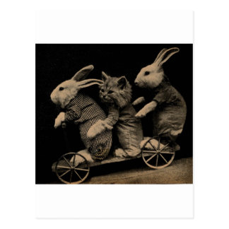 Vintage Kitten and Bunny Funny photo Postcard