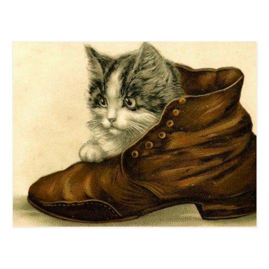 vintage kitten in shoe postcard