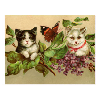 Vintage Kitty Cats and Butterfly Postcard