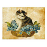 vintage kitty in basket post card