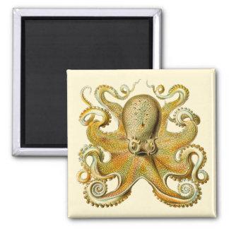 Vintage Kraken, pulpo Gamochonia, Ernst Haeckel Imán Cuadrado