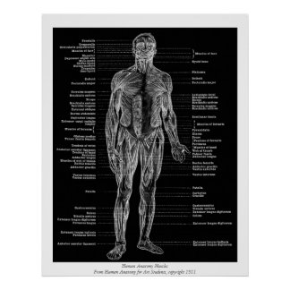 Vintage - la anatomía humana Muscles negro de la v Impresiones