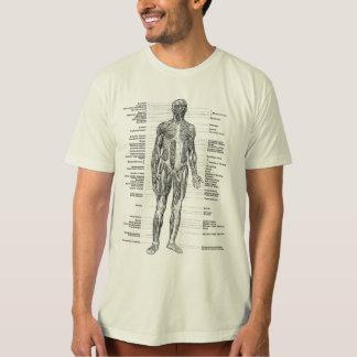 Vintage - la anatomía humana Muscles visiónes Remera