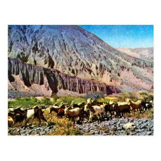 Vintage, la Argentina, erosión de la roca, manada  Postales