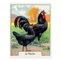 Vintage La Fleche Chicken Postcard