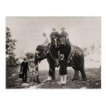 Vintage la India, viajando por el elefante Postales