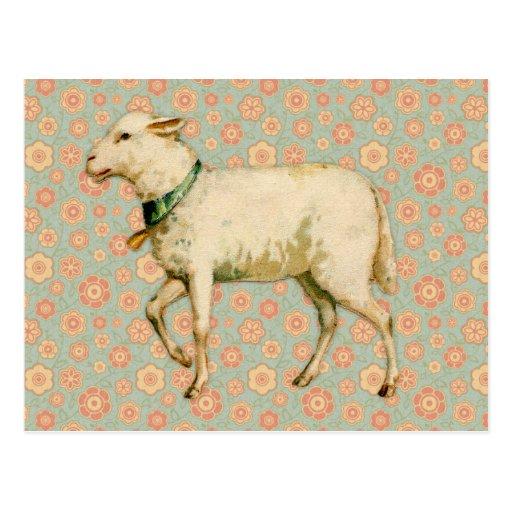 Vintage Lamb Art Post Card