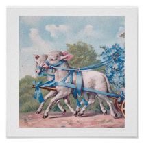 Vintage Lambs Dressed  in Fancy Blue Ribbons Poster