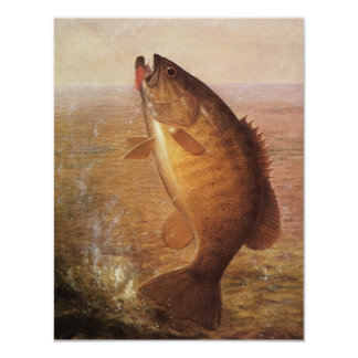 Vintage Largemouth Brown Bass Fish, Sports Fishing Card