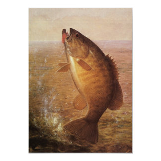 Vintage Largemouth Brown Bass Fish, Sports Fishing Card
