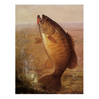 Vintage Largemouth Brown Bass Fish, Sports Fishing Postcard