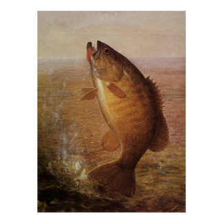 Vintage Largemouth Brown Bass Fish, Sports Fishing Poster