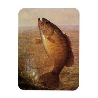 Vintage Largemouth Brown Bass, Sports Lake Fishing Rectangular Photo Magnet