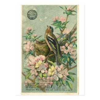 Vintage Lark Bird Postcard