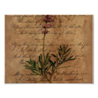 Vintage Lavender on Distressed Writing Paper Photo Print