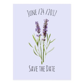 Vintage Lavender - save the date Postcard