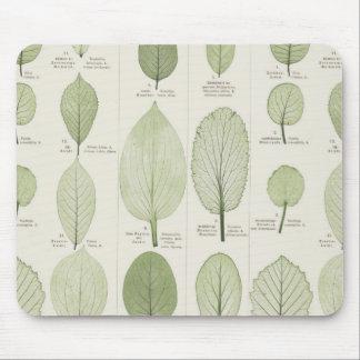 Vintage Leaf Illustrations Mouse Pad