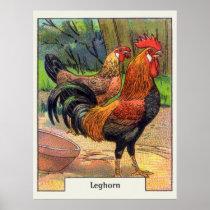 Vintage Leghorn Chicken Poster