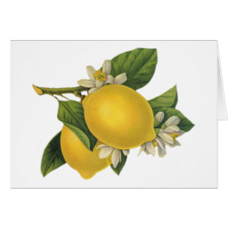 Vintage Lemons Illustration Card