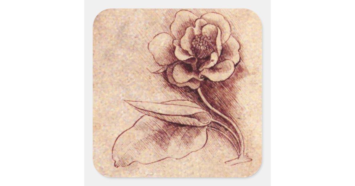 Vintage Leonardo Da Vinci Flower Square Sticker Zazzle Com
