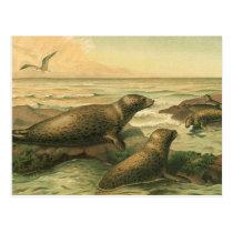 Vintage Leopard Seals, Aquatic Animals Marine Life Postcard