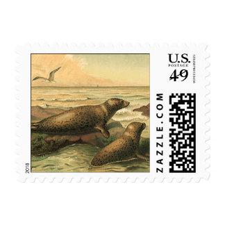 Vintage Leopard Seals by the Ocean, Wild Animals Postage