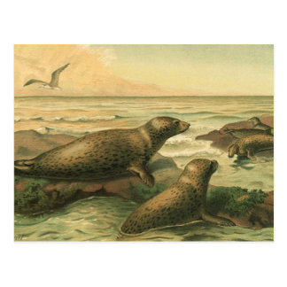 Vintage Leopard Seals, Marine Life Aquatic Animals Postcard