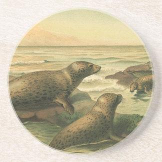 Vintage Leopard Seals, Marine Life Aquatic Animals Sandstone Coaster