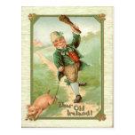 Vintage Leprechaun Pig Shillelagh St Patrick's Day Postcard