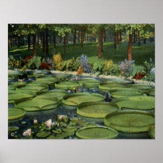 Vintage Lilly Pond Floral Nature Poster