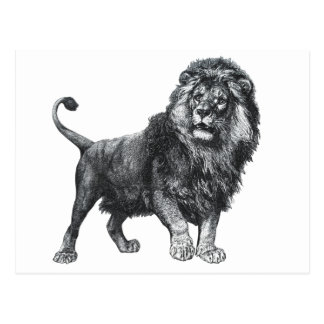 Vintage lion drawing, paw lifted looking left postcard
