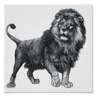 Vintage lion drawing, paw lifted looking left poster