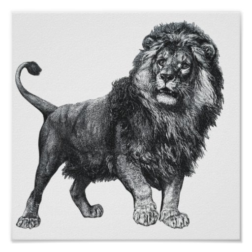 Vintage lion drawing, paw lifted looking left print