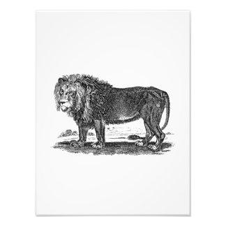 Vintage Lion Illustration -1800's African Animal Photo Print